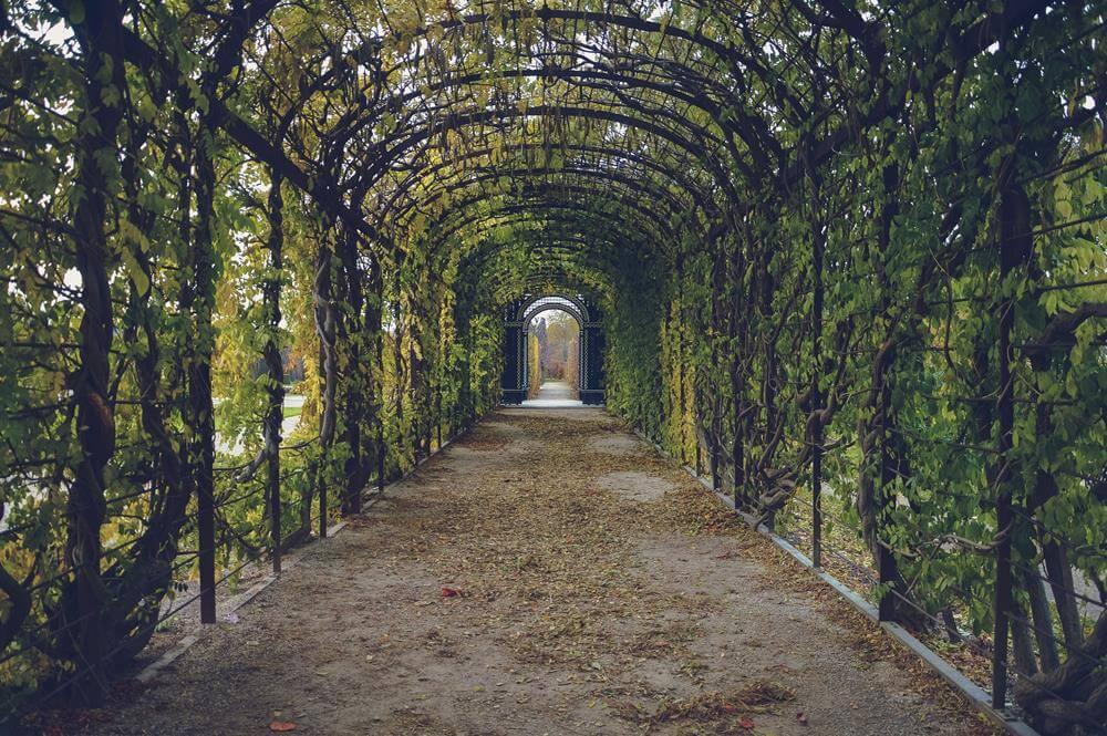 Garden path sentences