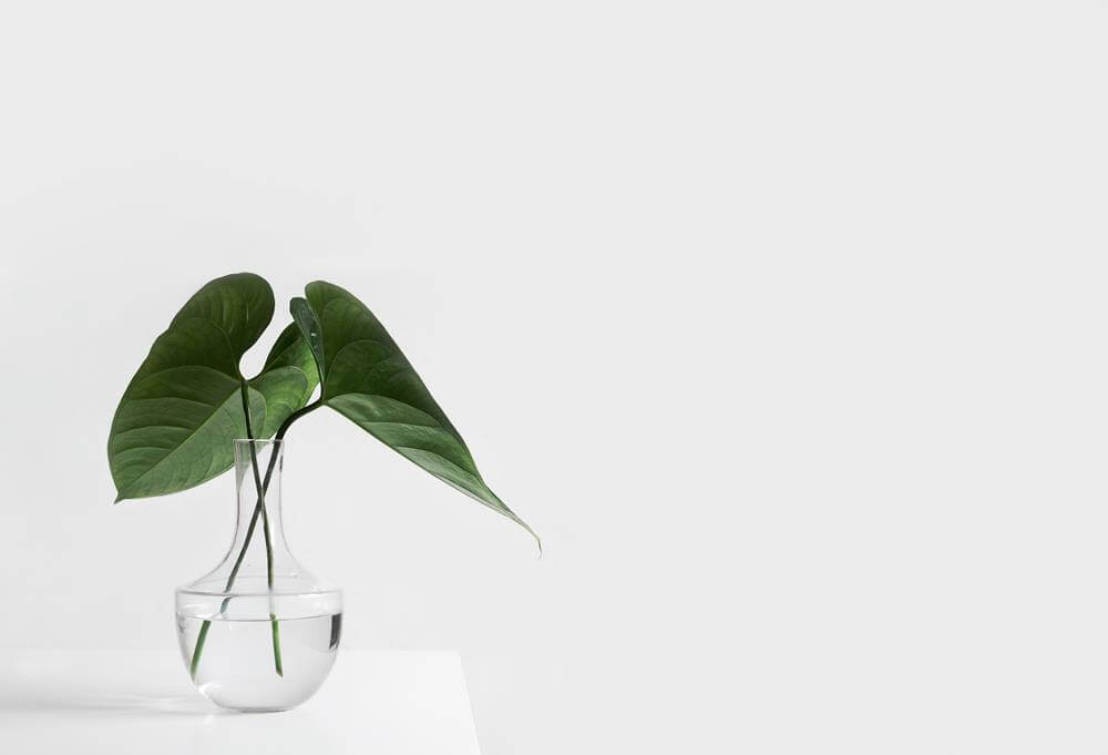 How Plants Can Make You Happier and More Productive